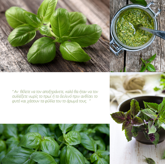 BASIL-images-new